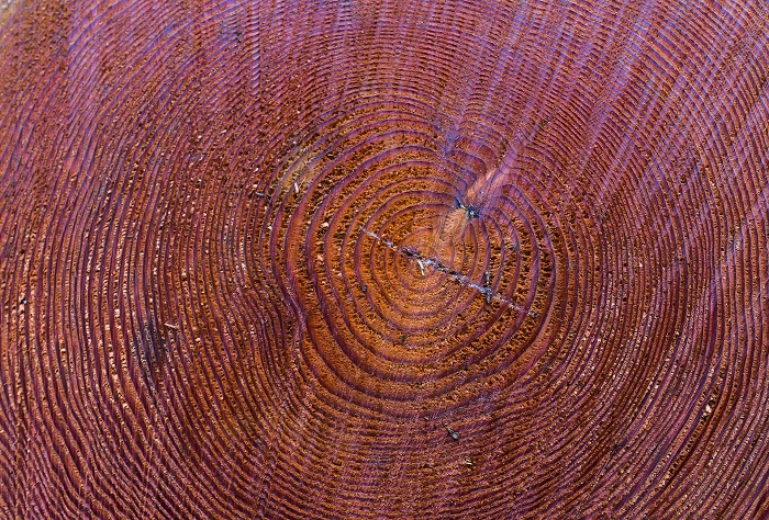 Farba na drevo na záhrade